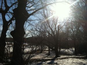 Prospect Park-Winter